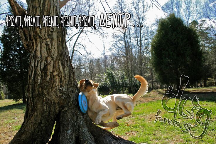 Oooppsss! #funny #dogs #frisbee