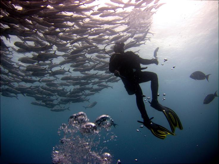 #PotentialistCanada - Trip Purpose 1: Improve my photography skills - Ascending into a school of fish in Bali
