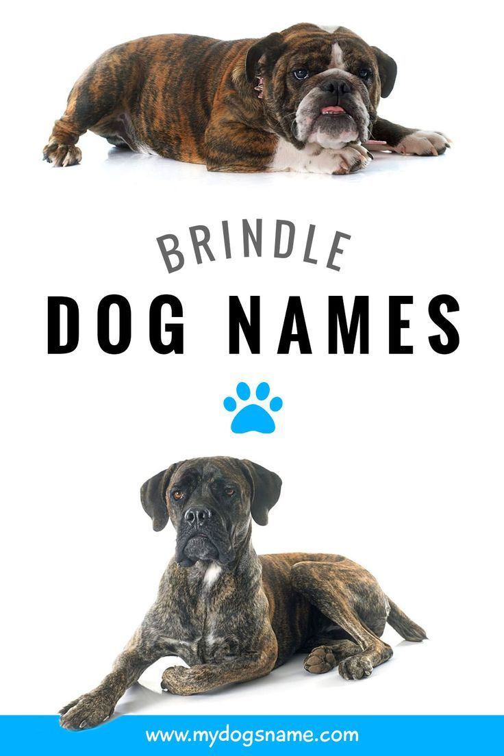 Brindle Dog Names In 2020 With Images Dog Names Best Dog