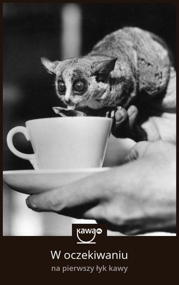 W oczekiwaniu na pierwszy łyk kawy