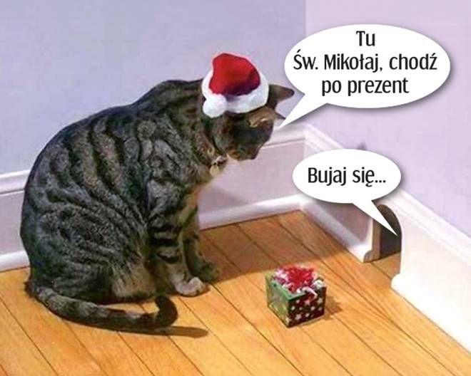 Pin By Karolina Zolnierz On Humor Zabawne Zwierzeta Koty I Kocieta Kotek
