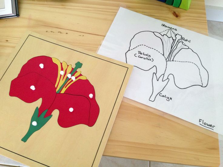 Montessori peg puzzle of a flower with an activity sheet I made for the older children who want to learn the parts of a flower.