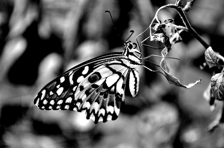 Un Belle Papillon by Indah Sari Ratu on 500px