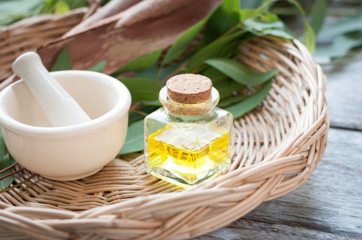 Phytotthérapie : voici quelques recettes naturelles à base d'huile essentielle d'eucalyptus pour dégager les bronches encombrées, pour la cicatrisatio...