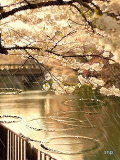 gyclli: Beautiful nature, water, rain, trees ..
