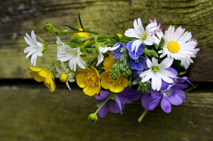 Kwiaty, Bukiet, Stokrotki, Kaczeńce