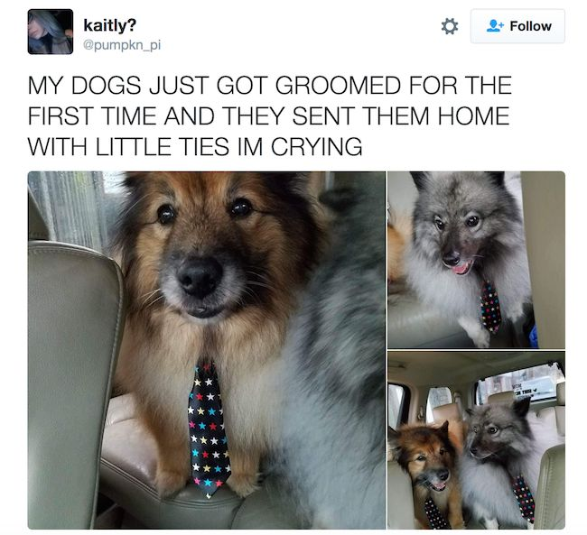 WHO THOUGHT IT WAS A GOOD IDEA TO GIVE DOGS TIES BECAUSE IT WAS A FANTASTIC IDEA