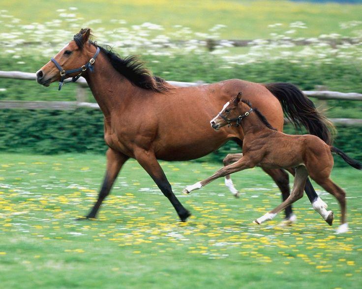 Beautiful Animal, 15 most beautiful horse photos (13)