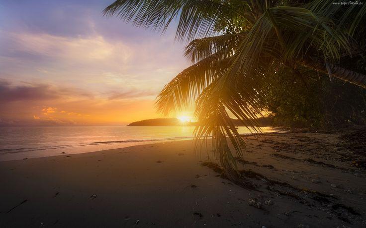 Morze, Palmy, Zachód słońca, Plaża