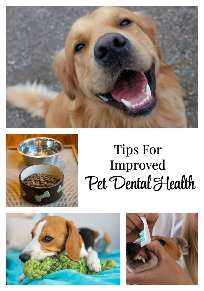 February Is National Pet Dental Health Month But We Must Care For