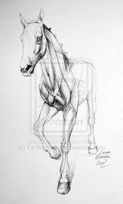 Horse sketch by ~FerBarchetta on deviantART