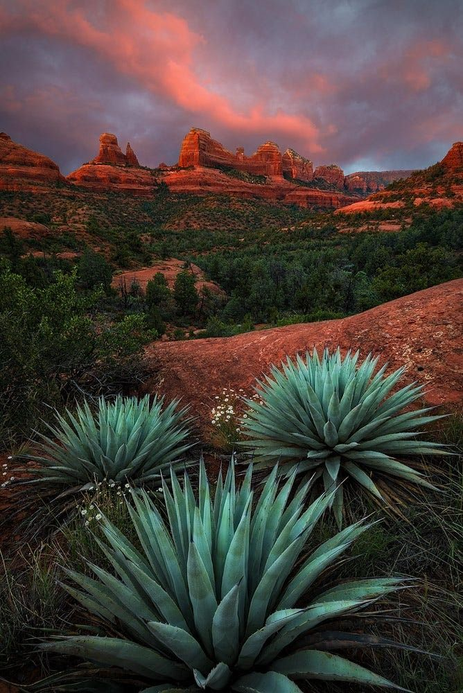 I love going to visit the red rocks, shops, and galleries in Sedona whenever I can.