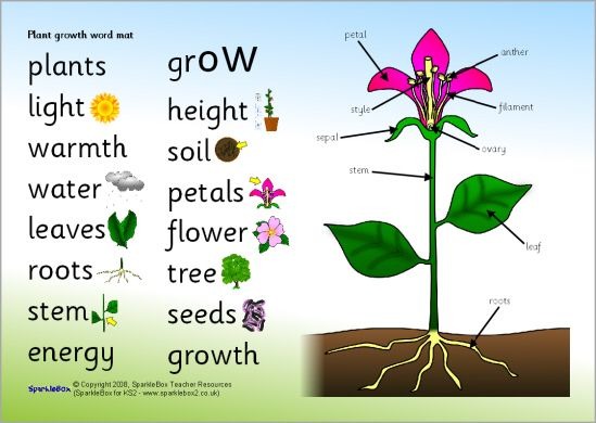 Plant Growth Word Mat Sb6661 Sparklebox Mothers Day