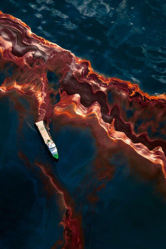 The price of oil - Daniel Beltrá - Wildlife Photographer of the Year 2011 : Wildlife Photojournalist Award - Winner