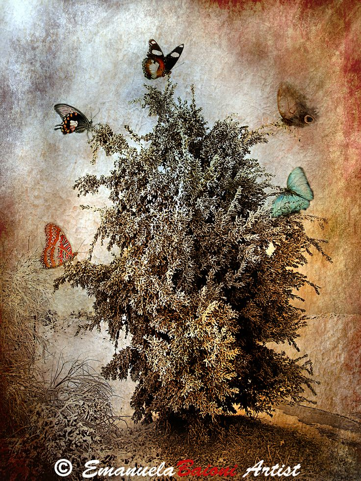 """ The Tree of Butterflies """