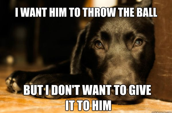 not so smart dog lol: Laughing, Ball, Pet, Doggies, Dogs Problems, Funny, Puppys, Black Labs, Animal