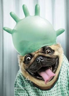 dokter hond die grappig lacht