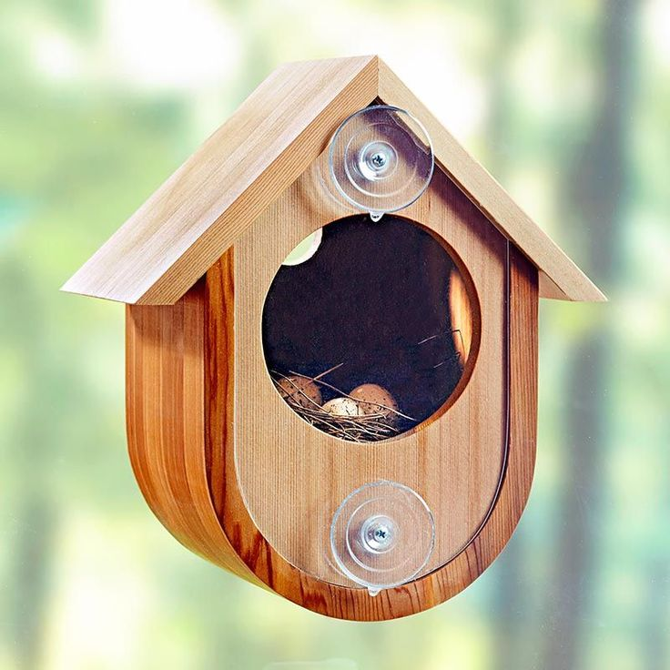 See-in birdhouse woodworking plan. A great project to share with a young woodworker, this simple bird abode makes it possible to experience the wonder of nature from the comfort of your home. Just stick it to a window and wait for feathered friends.