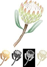 South African protea, scraperboard or linocut illustration vector, optional types. vector art illustration