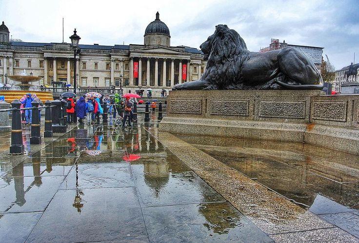 #trafalgarsquare #nationalgallery #London #rainylondon #londonpop #londonlife #londonbylondoners #londonmoments #igerslondon #shutup_london #timeoutlondon #puddlegram #reflectionpic #nikonphotography  #トラファルガー広場 #ナショナルギャラリー #ロンドン #イギリス #雨の日 #水溜り #反射 #ライオン #登りたいんだけどなかなか難しい #ツルツルだし #流石に雨だと誰も登ってない #滑って危ないからやめようね #ニコン #写真部 #ファインダー越しの私の世界 by chichiwawawa