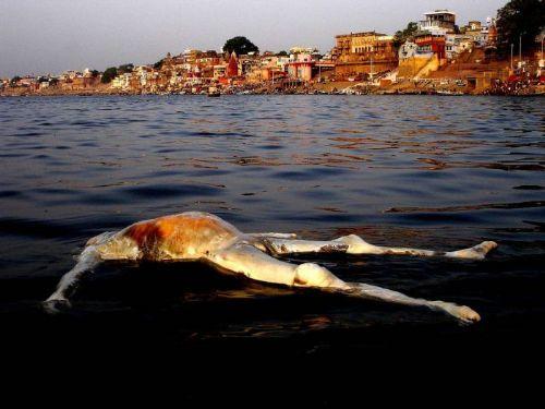 El río Ganges es un lugar sagrado y puro, o por lo menos eso es lo que le dicen a los turistas. El río es un lugar donde los locales lavan los platos, la ropa y realizan su aseo personal, pero también realidad es un deposito de cadáveres, ya que los lugareños, al no el dinero suficiente para entierros o cremaciones, arrojan a sus familiares muertos al río.