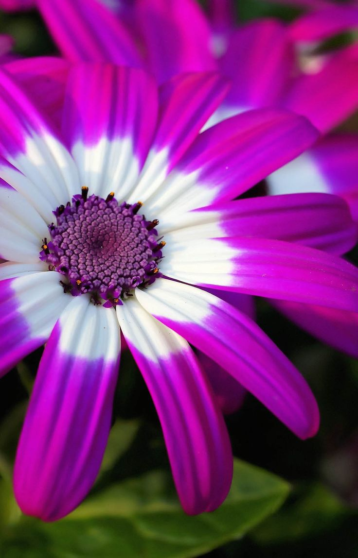 You will find the 35 the best flower photos in this gallery.