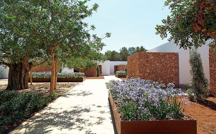 Modern landscaping with ancient trees at Ca Na Xica hotel, Ibiza with Modern guest pavilions by architect Marc Tur Torres.