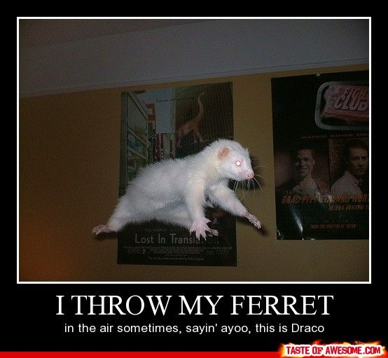 meet my ferret threw