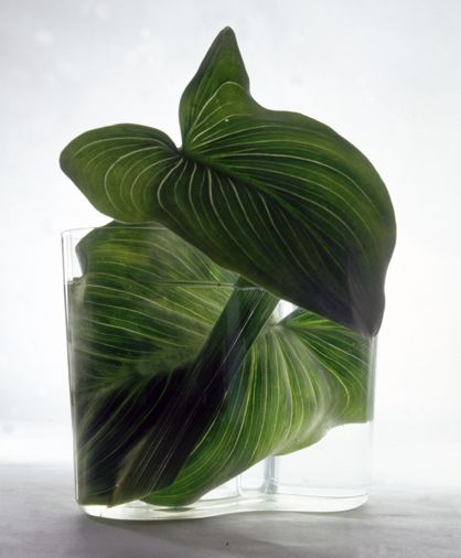 | P | Styling - Two green leaves in vase.