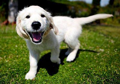 perrito contento