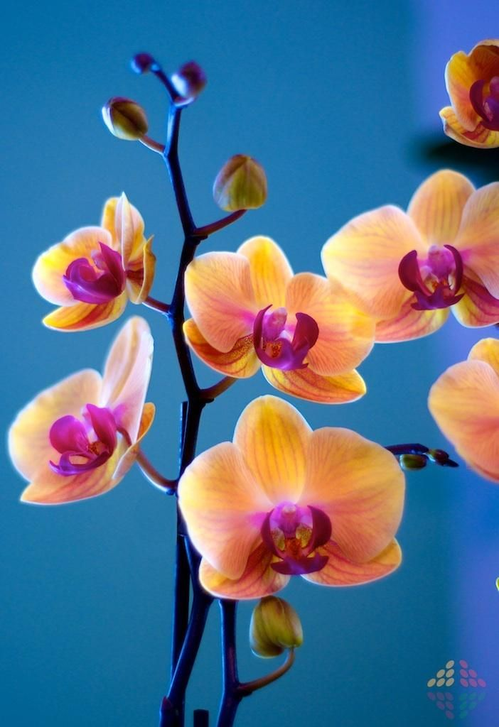 Dramatic and beautiful orchids