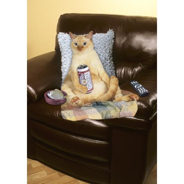 cat beer bottle animal - photo #27