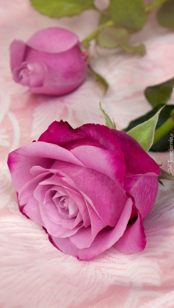 Rozowe Roze Tapeta Na Telefon Love Rose Flower Rose Flower Wallpaper Purple Roses Wallpaper