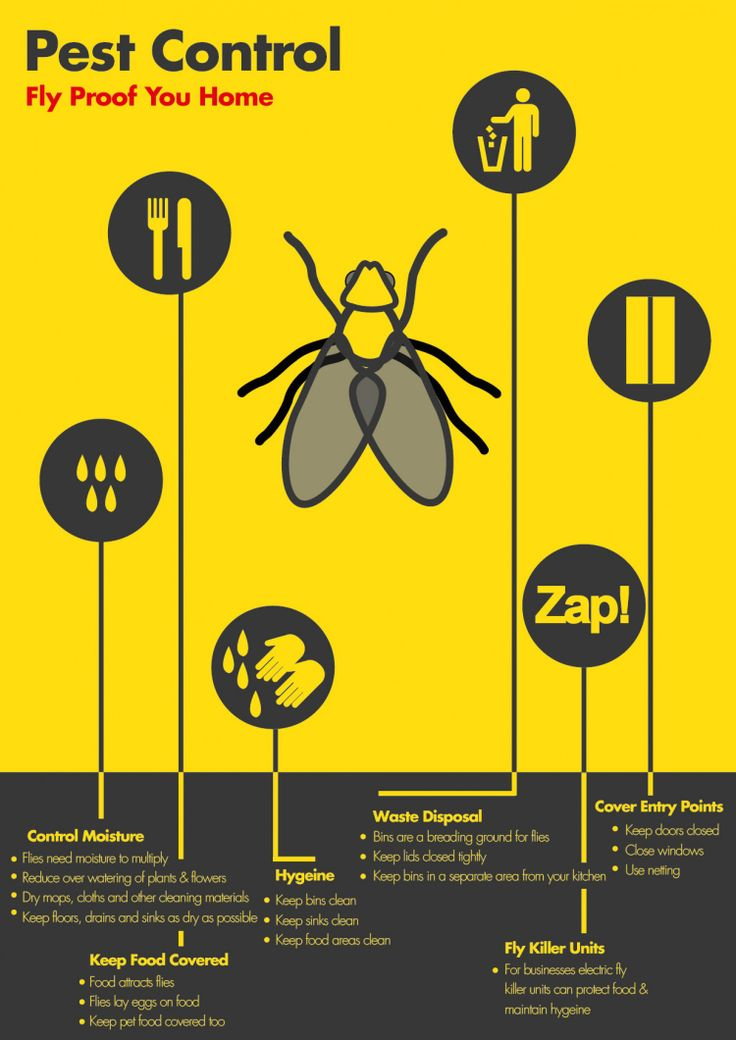 Tips to #fly proof your home  #aceexterminating