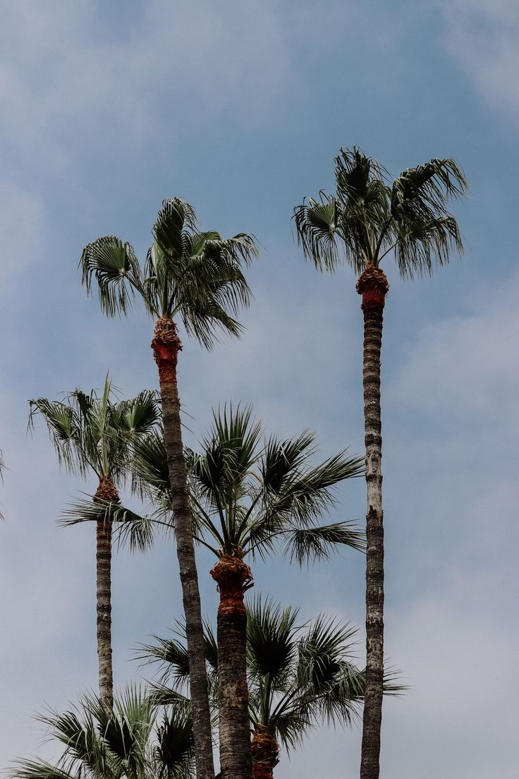 Palm trees Cannes La Croisette Côte d'Azur 23timezones