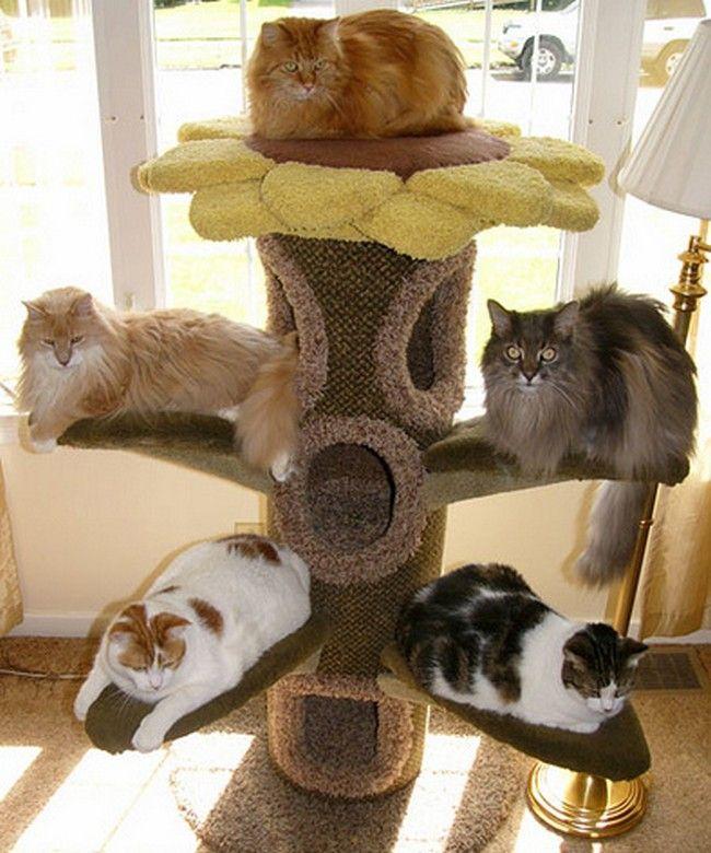 Super, super cute! Peaceful, happy cats.