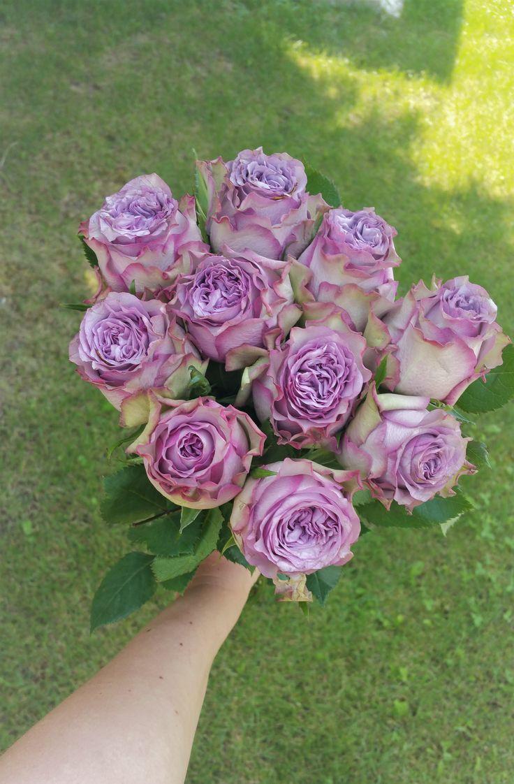 Purple roses #flowersdelivery #roses #purpleroses #kvetyexpres #Slovakia