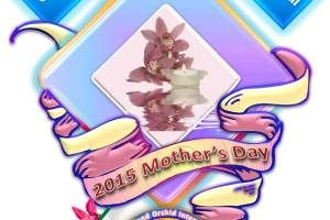 Celebrate 2015 Mother's Day with Orchids, Arts, Gifts and Shows 💐🎁 https://queenslandorchid.wordpress.com/2015/05/10/celebrate-2015-mothers-day-with-orchids-arts-gifts-and-shows/