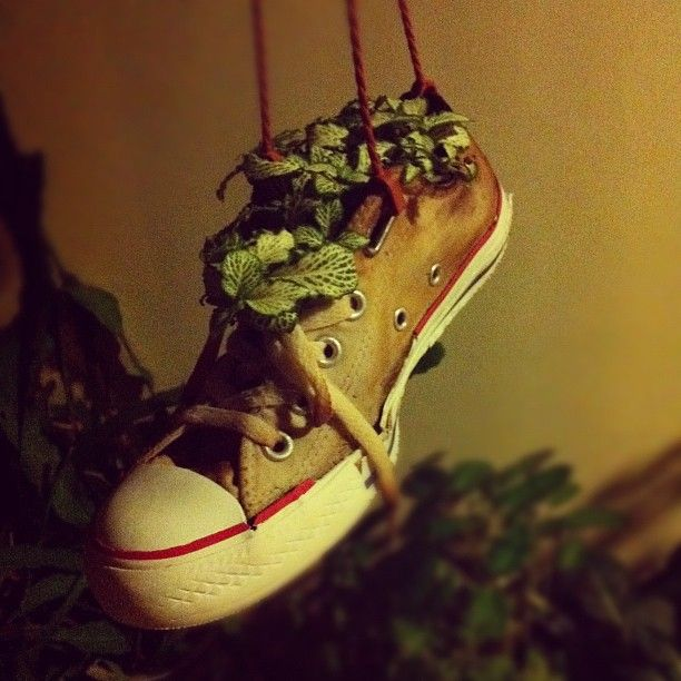 Give a shoe a second life: Turn your shoe into a hanging pot for a plant.