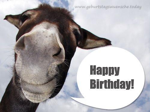 Geburtstagsbild: Lustiger Esel mit Geburtstagsspruch