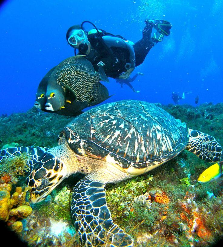 Scuba diving in Cozumel. Love it!!!
