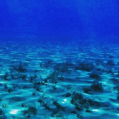 """Today come and """"dive"""" @Cretaquarium @VisitGreecegr @DiscoverGRcom @destination_c #cretaquarium #lp #tripadvisor"""