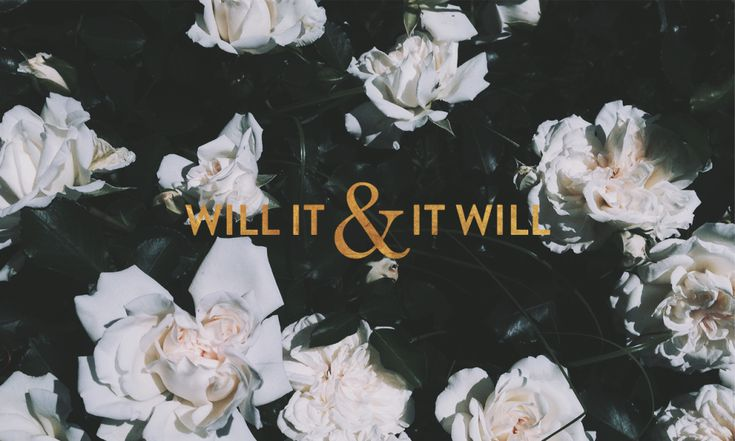 'Will it' white roses floral desktop wallpaper background
