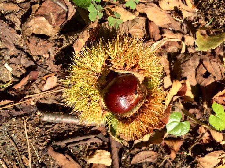武蔵野の小径。秋のはじまり。