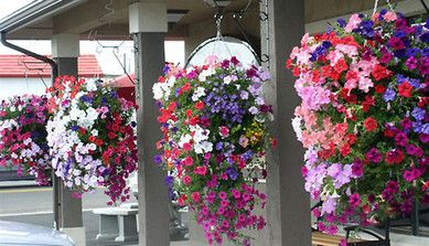 Find cheap artificial hanging baskets to add beauty and accentuate the appearance of your flowers in your garden.