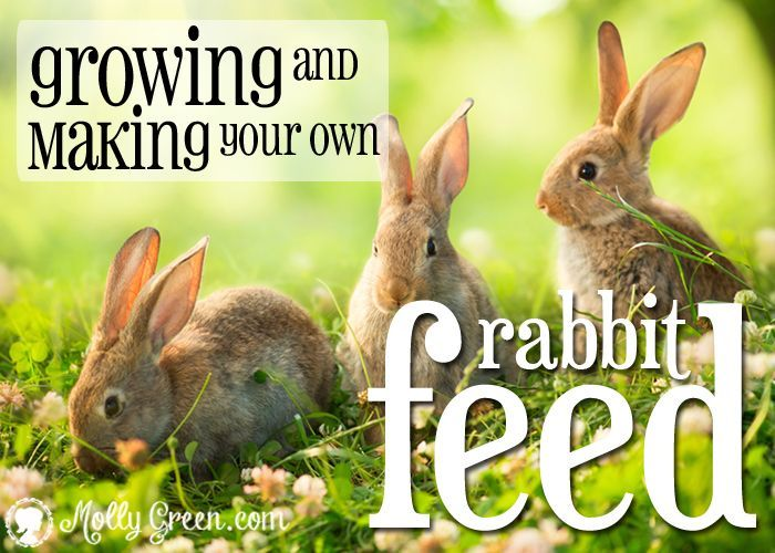 Make Your Own Rabbit Feed Instead of buying expensive, store-bought rabbit pellets, utilize the abundance of greens and weeds in your yard and feed your rabbits naturally.