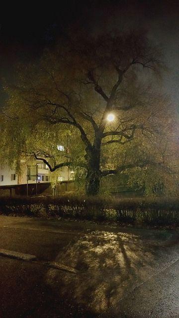 Tree by Nana Långstedt