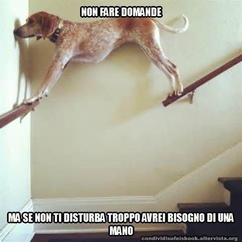 Non fare domande foto divertente, cane in bilico su passamano delle scale, cani buffi, risate animali, meme.