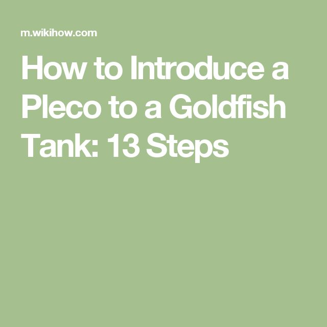 How to Introduce a Pleco to a Goldfish Tank: 13 Steps