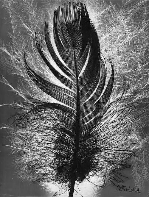 Feather by Roger Catherineau